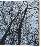 Trees From Below Wood Print