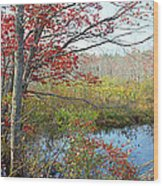 Trees In A Forest, Damariscotta Wood Print