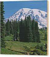 Trees In A Forest, Mt Rainier National Wood Print