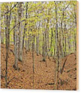 Trees In A Forest, Stephen A. Forbes Wood Print