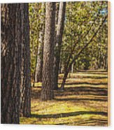 Trees In A Park Wood Print