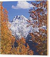 Trees In Autumn, Colorado, Usa Wood Print