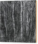 Trees In Black And White Wood Print