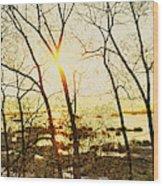 Trees In Marsh, Maine, Usa Wood Print