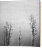 Trees In Mist Wood Print