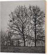 Trees In November Wood Print