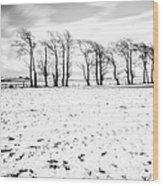 Trees In Snow Scotland Iv Wood Print