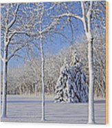 Trees In Snow  Wisconsin Wood Print by Anonymous