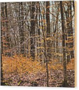 Trees In The Forest In March With Orange Leaves Wood Print