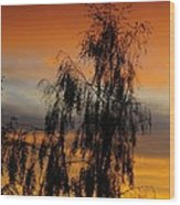 Trees In The Sunset Wood Print