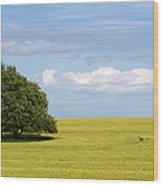 Trees In Wheat Field Wood Print