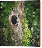 Tree's Mandala Wood Print