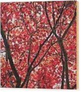 Trees Of Autumn Wood Print