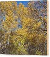 Trees Of Color Wood Print