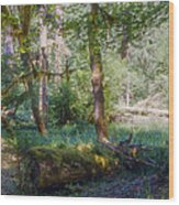Trees Of The Rainforest Wood Print