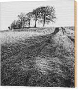Trees On A Hill Wood Print by John Farnan
