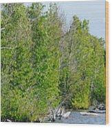 Trees On A Lakeshore Wood Print
