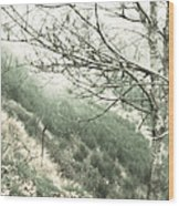 Trees On A Mountain Wood Print
