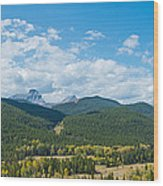 Trees On Canadian Rockies Along Route Wood Print