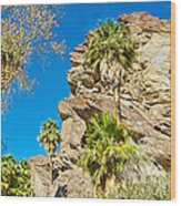 Trees On South Side Of Andreas Canyon In Indian Canyons-ca Wood Print