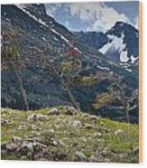 Trees On Top Of A Ridge At Glacier National Park Wood Print