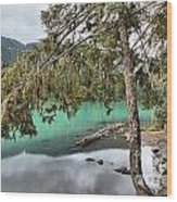 Trees Overhanging Cheakamus Lake Wood Print