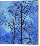 Trees So Tall In Winter Wood Print