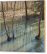 Trees Standing In The Water Wood Print