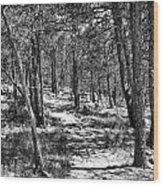 Trees Wood Print by Tony Boyajian
