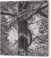 Trees Under Snow Wood Print