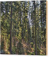 Trees With Moss In The Forest Wood Print