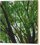 Treetops 2 Wood Print