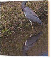 Tri-colored Heron 1 Wood Print