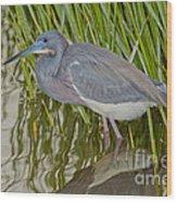 Tri-colored Heron Wood Print