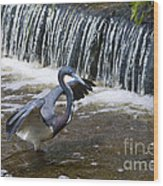 Tri-colored Heron No.2 Wood Print