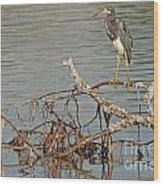 Tri-colored Heron On The Water Wood Print