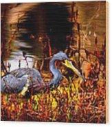 Tri Colored Heron - Reflection Wood Print