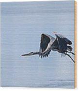 Tri Colored Heron Take Off Wood Print