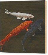 Tri-colored Koi Wood Print