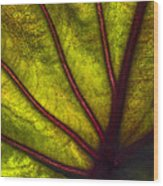 Tributaries Wood Print by Debra and Dave Vanderlaan