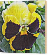 Tricolor Pansy Wood Print