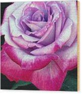 Tricolor Rose Wood Print