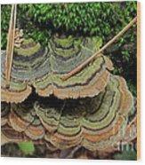 Tricolor Turkeytail Wood Print