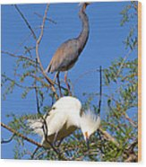 Tricolored Heron And Snowy Egret Wood Print