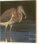 Tricolored Heron With Fish Wood Print