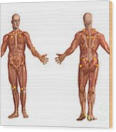 Trigger Points On The Human Body Wood Print