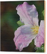 Trillium Blush Wood Print