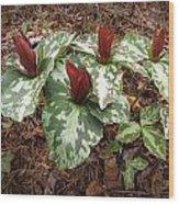 Trillium Cuneatum Wood Print