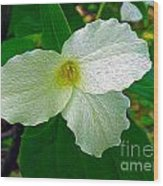 Trillium In The Forest Wood Print