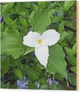 Trillium - White Beauty Wood Print